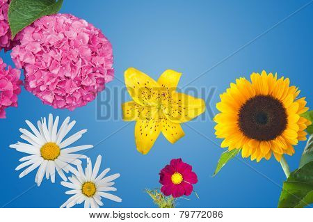 Hydrangea, Daisies, a Yellow Tiger Lily, a Magenta Anemone Coronaria and a Sunflower Isolated
