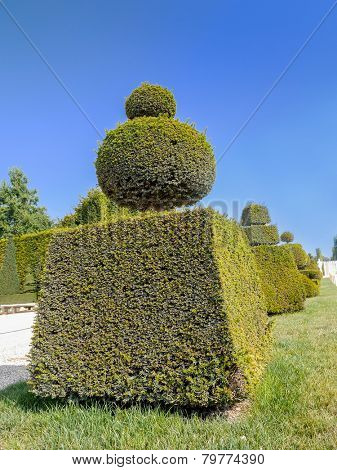 Fancy-shaped evergreen shrub in Versailles garden, France