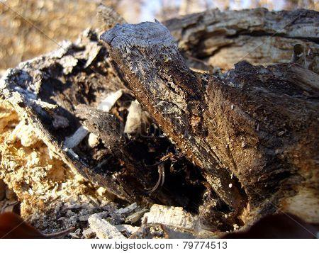 Wood Rotten
