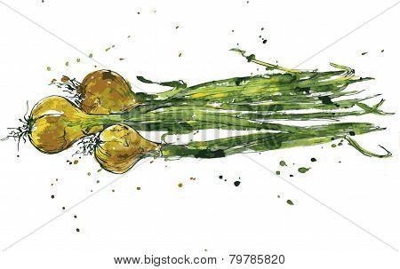 Hand drawn green onions