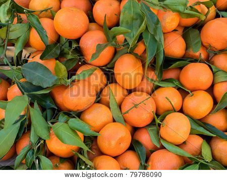 Bunch Of Fresh Clementines