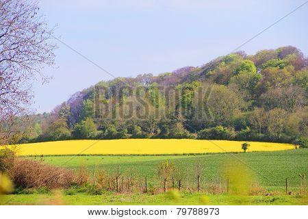 Landscaped Field