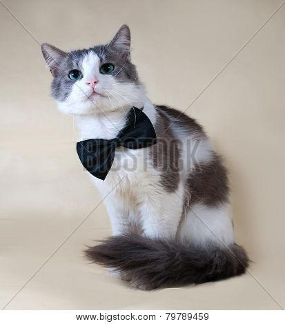 White Cat With Spots In Bow Tie Sitting On Yellow
