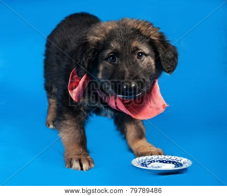 Black And Red Shaggy Puppy In Red Bandanna Standing On Blue