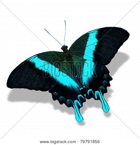 Papilio Blumei Butterfly , Isolated On White