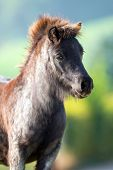stock photo of pony  - Pony head close up on summer background - JPG
