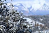 stock photo of blanket snow  - A snow blanket cover the La Plata Mountains in Durango - JPG