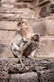 foto of baby-monkey  - Monkey mother and her baby sitting on a floor Pagoda - JPG
