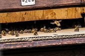 picture of bee keeping  - bees flying in and out of a beehive