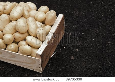 Box With Potatoes On Soil