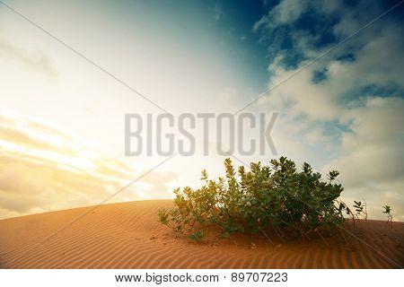 Green shrub in the desert