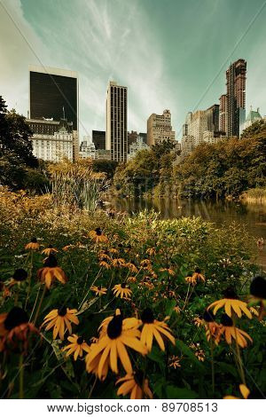 Central Park Spring flower with skyline in midtown Manhattan New York City