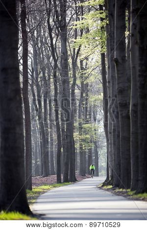 Man Cycling Near Beech Trees In The Netherlands