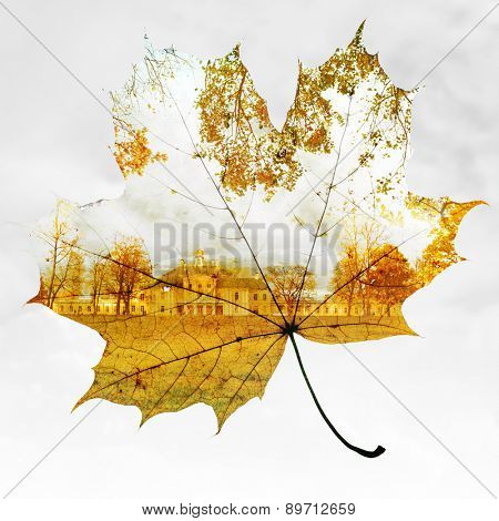 autumn maple leaf mixed with trees and sky, double exposure photo