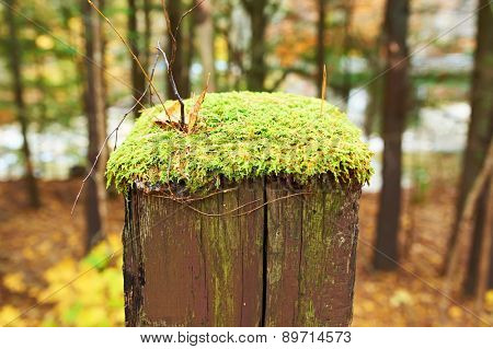 Moss grows over wooden pole