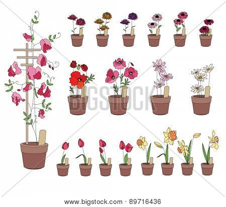 Flower pots with flowers - tulips, narcissus, poppy and aster. Plants growing on window sills and balcony