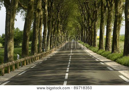France, A Small Country Road Lined With Trees
