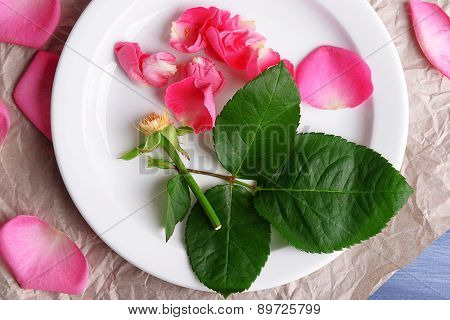 Beautiful pink roses in white plate on parchment, closeup