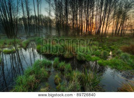 Beautiful Sunrise Over Foggy Wetlands