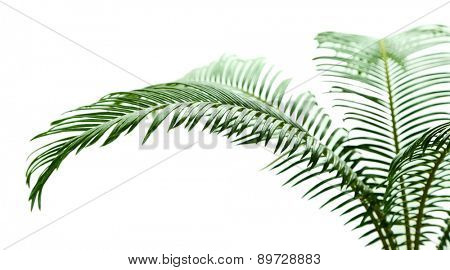Green palm tree on light background