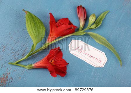 Beautiful alstroemeria with tag on wooden background