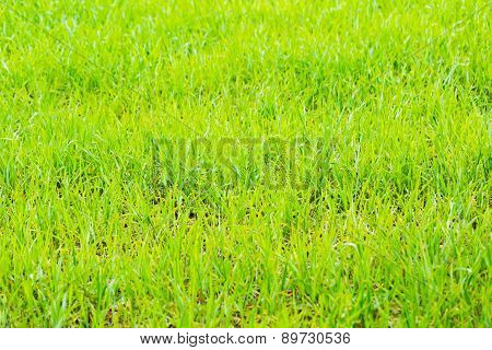 Background Of Lush Green Fields