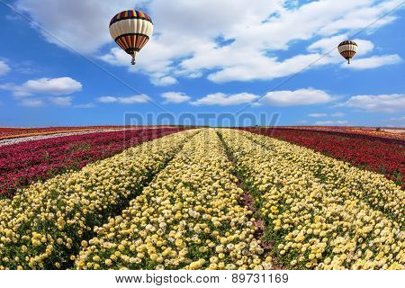 In the sky flying scenic balloons. The colorful buttercups. Spring windy day on the farm