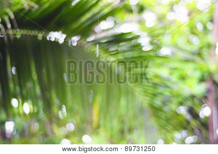 De-focused Palm Leaf - Beauty Of Nature