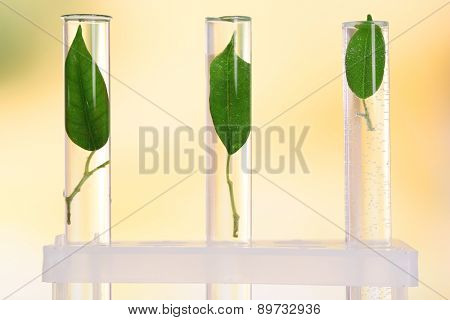 Green leaves in test tubes on light blurred background