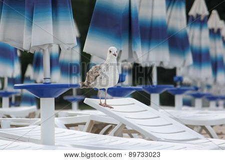 Young seagull on a lounger on the beach