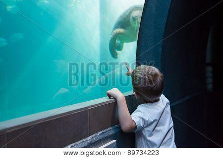 Little boy looking at fish tank at the aquarium