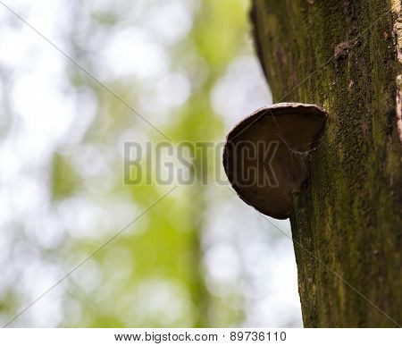 Tree Trunk With Hub