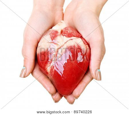 Heart in female hands isolated on white