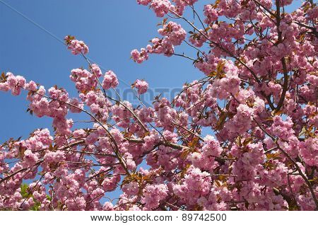 The Blossoming Tree