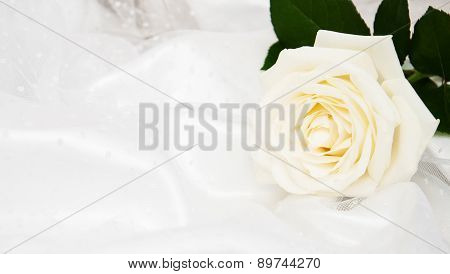 Rose On White Silk Background