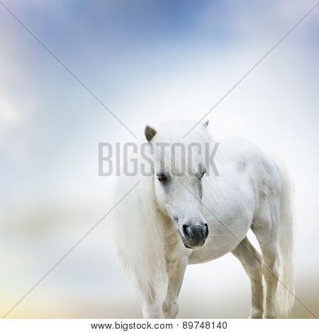 Portrait Of Cute White Pony