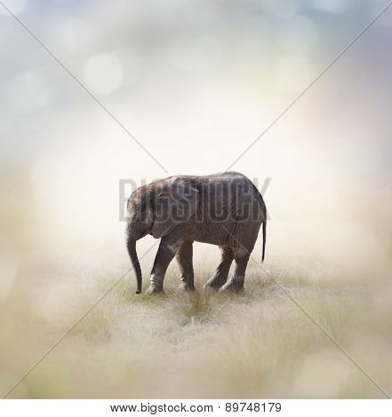 Portrait Of African Baby Elephant