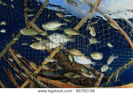 Environmental problem - fish stuck in a fisherman's trap