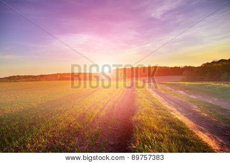 Green Field and Beautiful Sunset