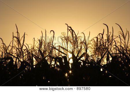 Autumn Harvest At Sunset