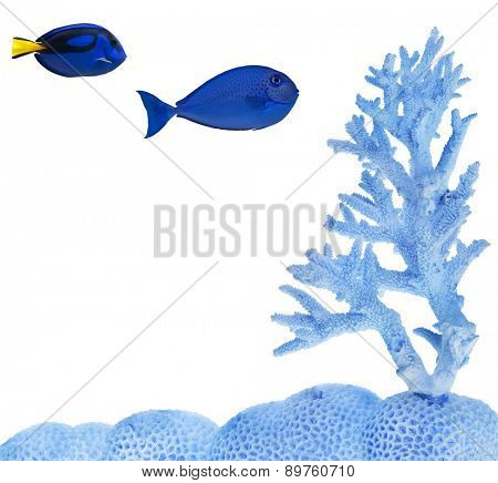 two fishes near blue coral isolated on white background