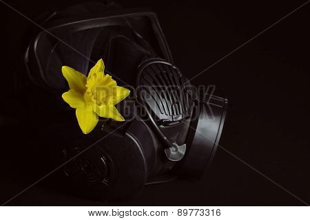 Gas Mask With Daffodil