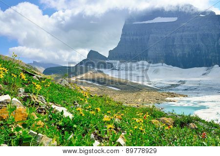 Wild Flowers And Clouds By Grinnell Glacier In Many Glaciers, Glacier National Park, Montana