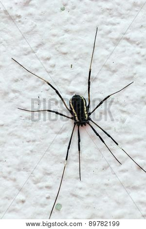Close Up Of A Big Black Spider