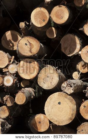Logs Stacked For Cutting