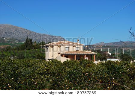 Country house and orange trees, Alora.