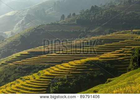 Beautiful Rice Terraces South East Asia Mu cang chai