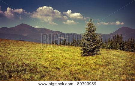 View Of Two Mountains Peak In The Carpathian Mountain