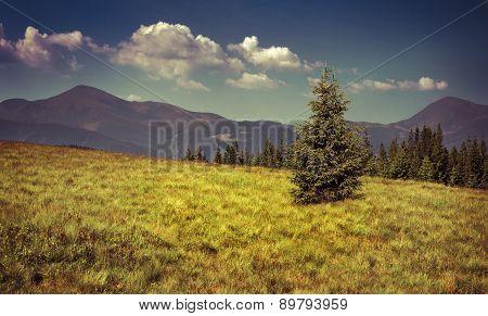 View Of Two Mountains Peak In The Carpathian Mountain