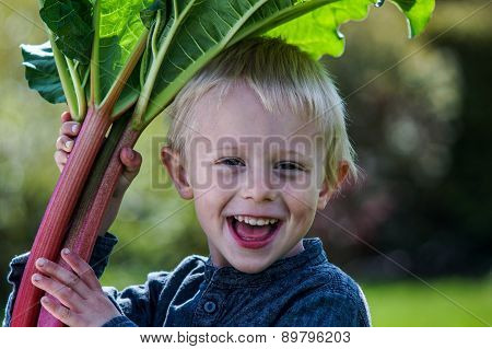 One Little Preschool Boy Who Have Harvest One Great Bunch Of Rhubarbs In The Garden On A Sunny Sprin